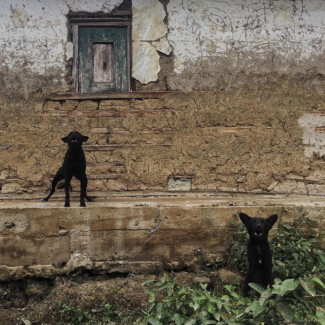 """Dos perros cuidan una casa abandonada en Tacueyó, Cauca. Este departamento fue una de las regiones más azotadas por el conflicto armado. El cinturón conocido como """"caucanistán"""" comprende una región que va desde Miranda, pasando por Corinto, Caloto, El Palo, Toribío, Tacueyó y Jambaló."""