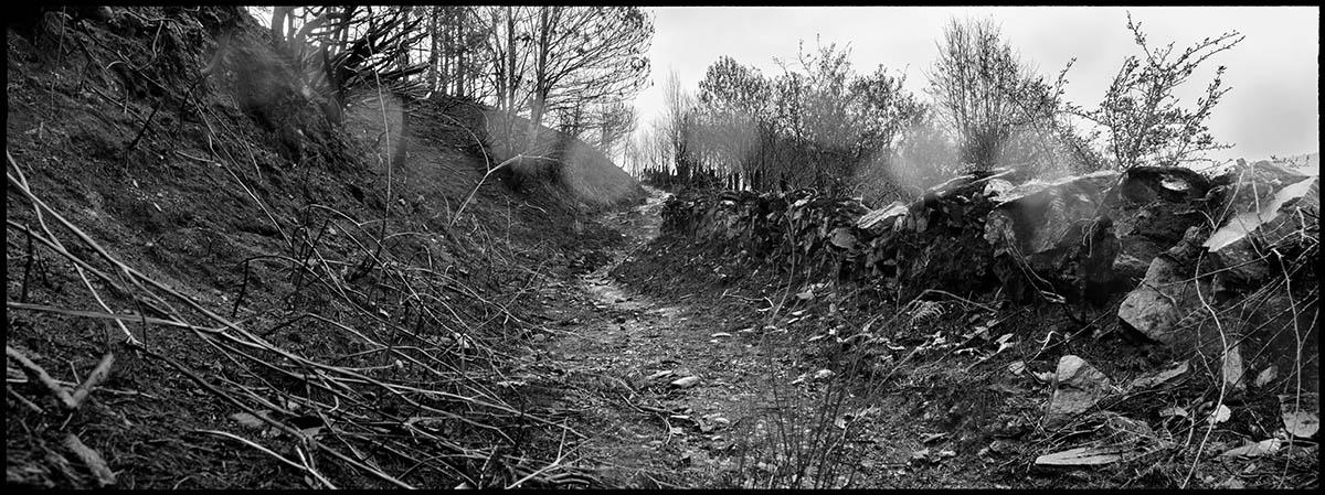 Un camino arrasado por el incendio en Piornedo.