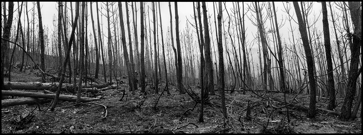 Un bosque calcinado en la provincia de Pontevedra