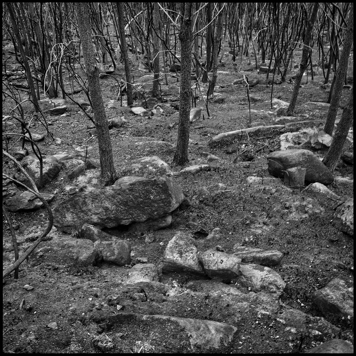 Restos calcinados de un bosque en la provincia de Pontevedra