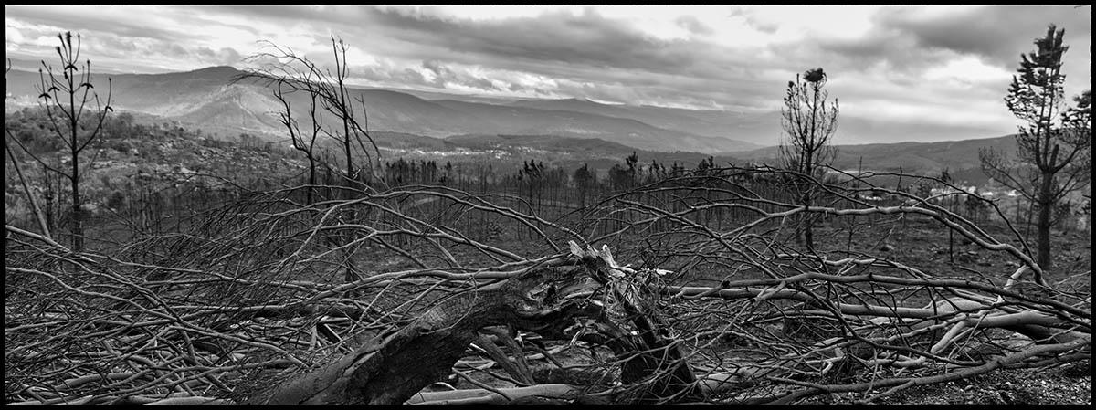 Silencio y destrucción. Es el legado de un incedio que deja 35.000 hectareas calcinadas en Galicia.